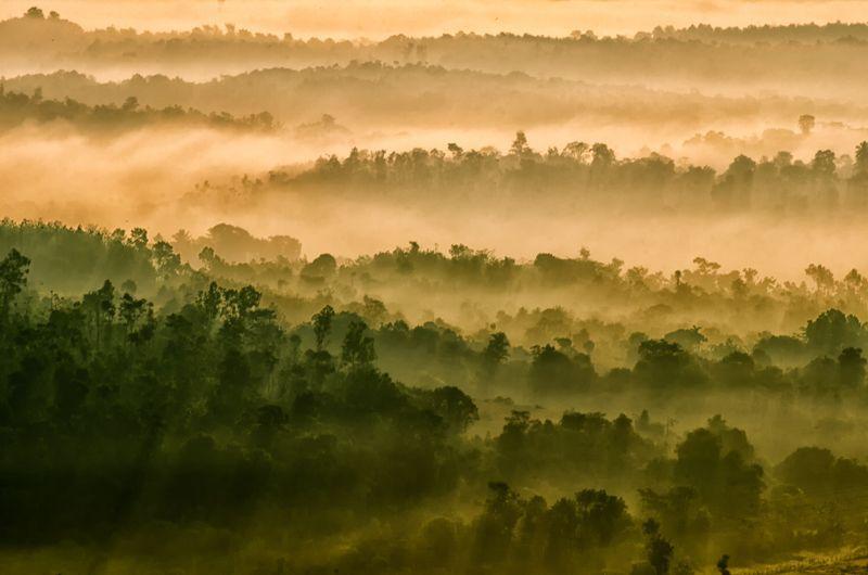 Natures Dawn